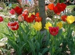 Flowerbed Spring Cleanup